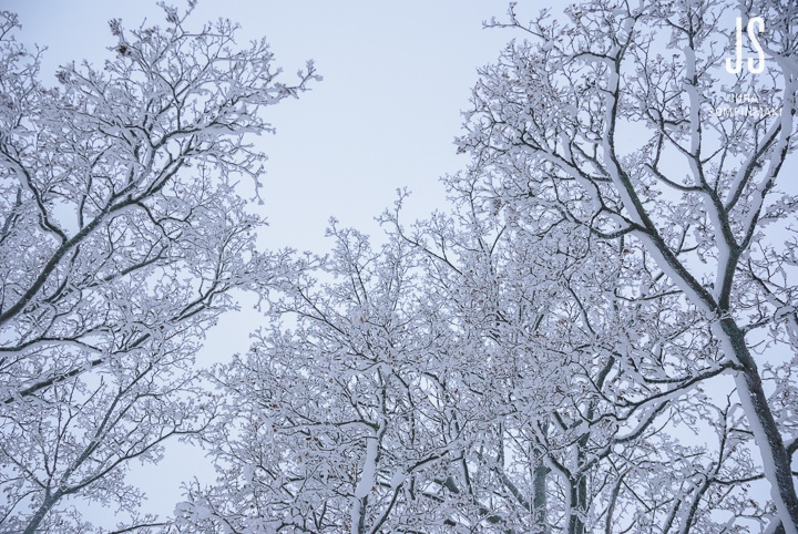 Trees covered in snow #Finland #winter #snow