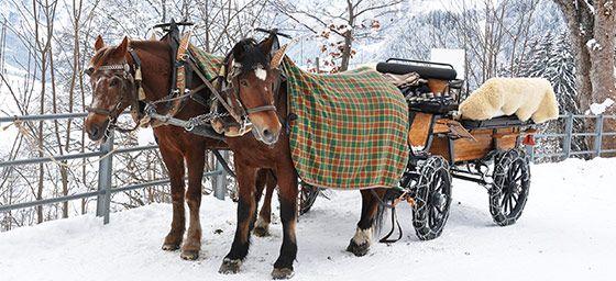 Snow Honeymoons: Horse