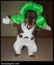 Oompa Loompa Costume #Animal Hospital #Veterinarian #Pets #KAH #Vet #FrederickMaryland #Costumes #Halloween