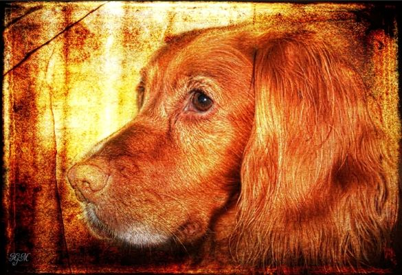Poppy My friends gorgeous dog.  Textures by 2 lil owls