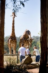 Taronga Western Plains Zoo offers an overnight 'Roar & Snore' programme.