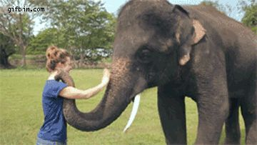 And an elephant waving goodbye: | 21 Things You've Never Seen Before In Your Life