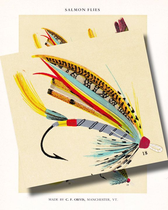 vintage fly fishing print with bright and colorful fish by artdeco