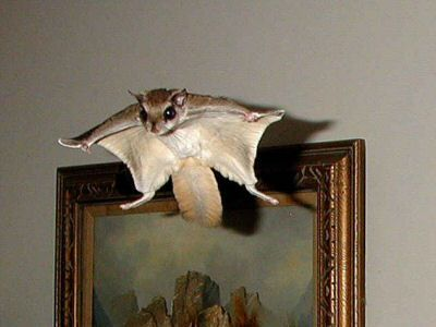 How To Build A Flying Squirrel Trap Woodworking Projects