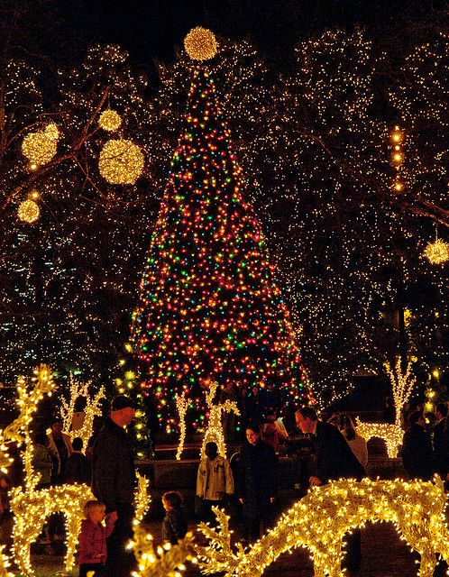 A few more lights and my front yard will look like this!!
