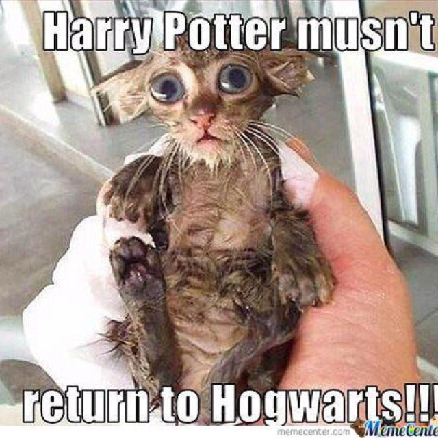 i couldnt resist!!!!! hahahaha DOBYHarry Potter Jokes, Cat, Real Life, Harry Potter Funny, Harrypotter, Kittens, Harry Potter Humor, So Funny, Animal