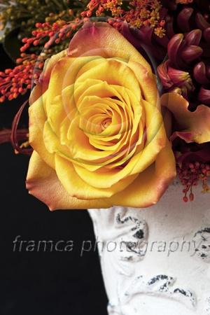 Summer scent  framcaphotography.com