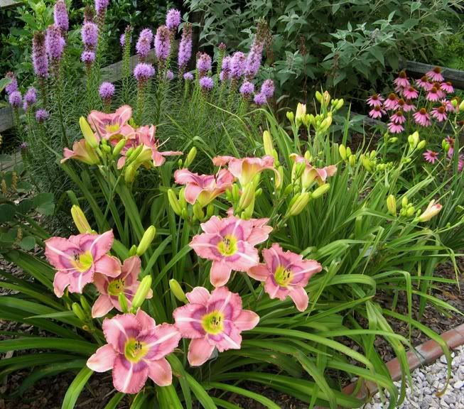 Flower Garden For Dummies: Daylily 'Last Flight Out' With Liatris And