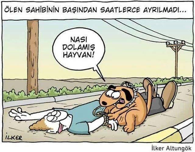 [Ölen sahibinin başından saatlerce ayrılmadı...] - Nası dolamış hayvan! #karikatür #mizah #matrak #komik #espri #şaka #gırgır #komiksözler