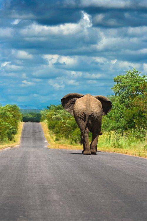 #BotswanaThe Roads, Southafrica, Elephant, South Africa, National Parks, Kruger National, Places, Travel, Animal