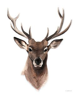 Aquarell Illustration Hirsch, Watercolor Deer / Stag