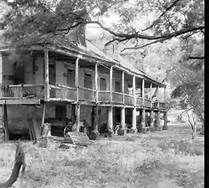 Abandoned plantations -