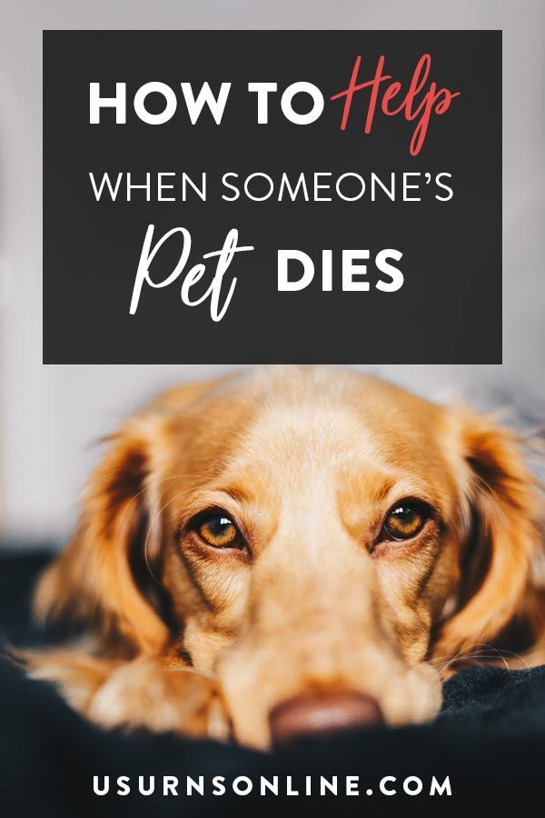 What To Do When Someone Loses A Pet How To Help When A Friend S Pet Dies Including What To Say What To Put In A Sympathy Card M Losing A Pet