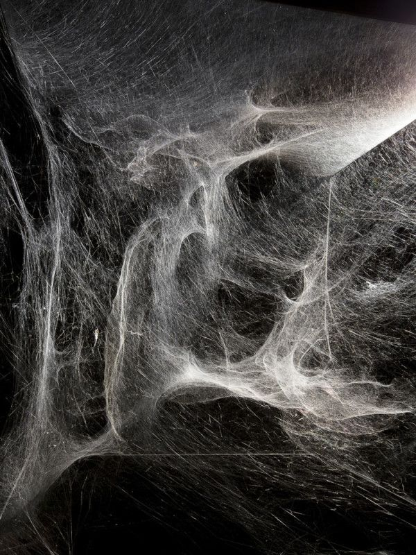 Working With Spiders: Tomás Saraceno