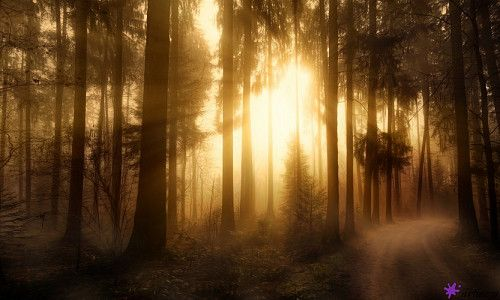 artiazza. Misty Forest by Christian Frank; photography, #photograph #photo #forest #sunrise #morning #walk #mystical #art #artiazza #artispassion