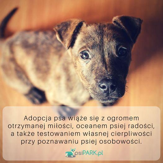 Więcej cytatów o psach