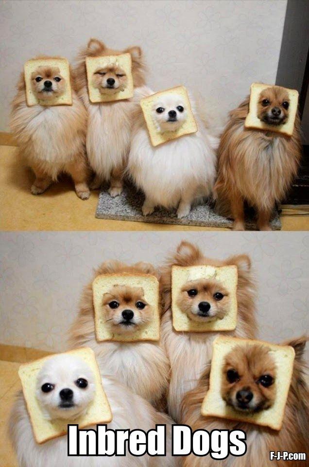 Funny Inbred Bread Dogs
