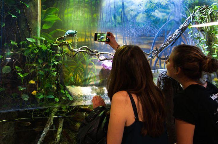 Bekijk de exotische vissen in het Aquarium - Barcelona Tips