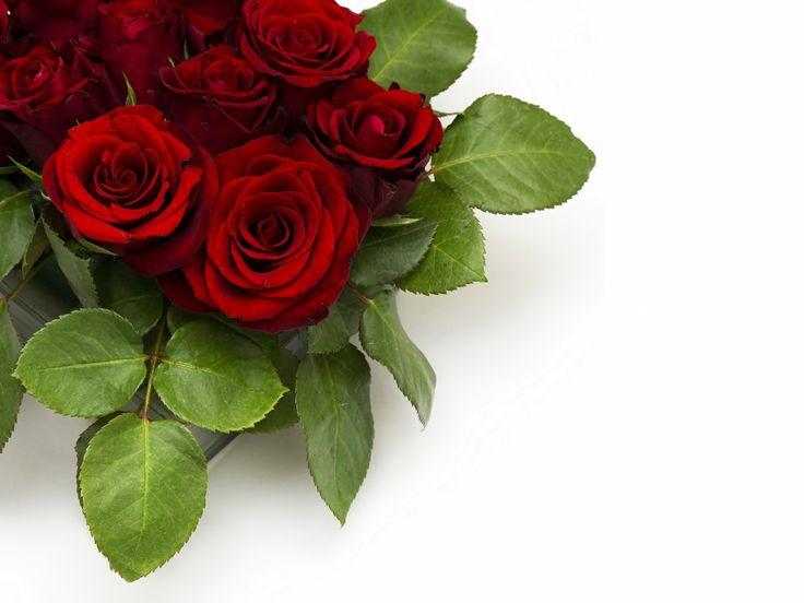 Розы Бордовый Листья Цветы