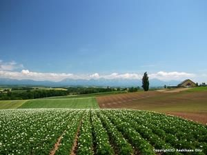 Biei-cho. Looking for more information aboout Hokkaido? Go Visit Asahikawa City. http://www.city.asahikawa.hokkaido.jp/