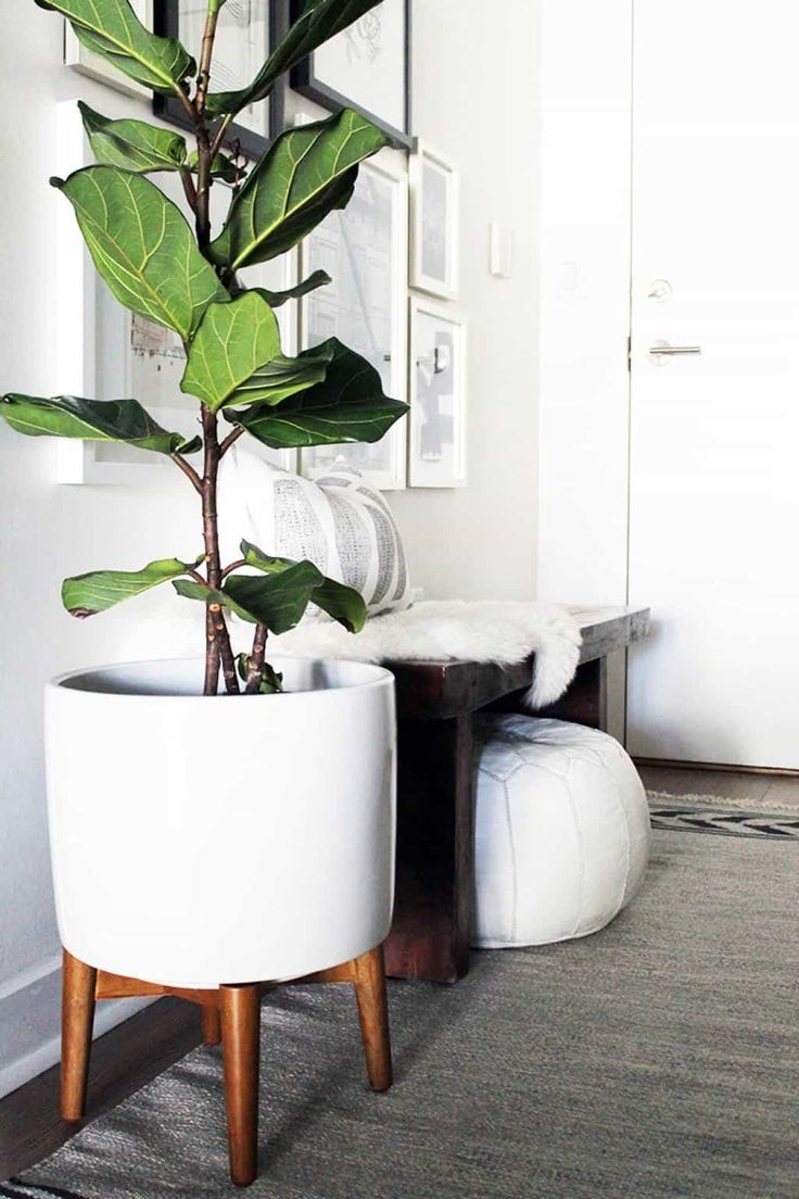 Best 25+ Indoor plant stands ideas on Pinterest   Plant stands ...