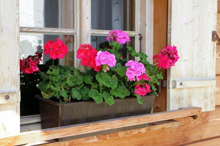 Bálint György kertről, növényekről