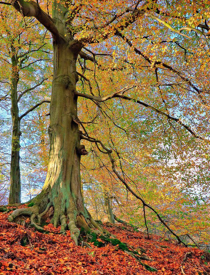Autumn woodland in the Peak District, England, by Stuart Thompson