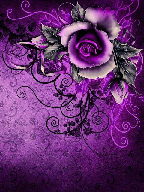 Love the range of purples, the textures, and the composition of this image!