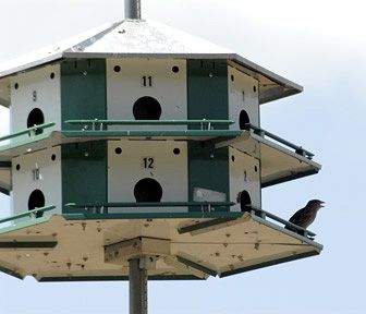 can't have pets in your apartment? put a birdhouse on your porch, it'll be like having lots of pets:)