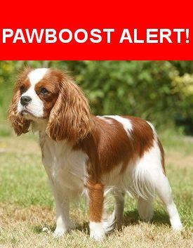 Please spread the word! Moose was last seen in Oxford, NY 13830.    Nearest Address: Near Water St & Mechanic St