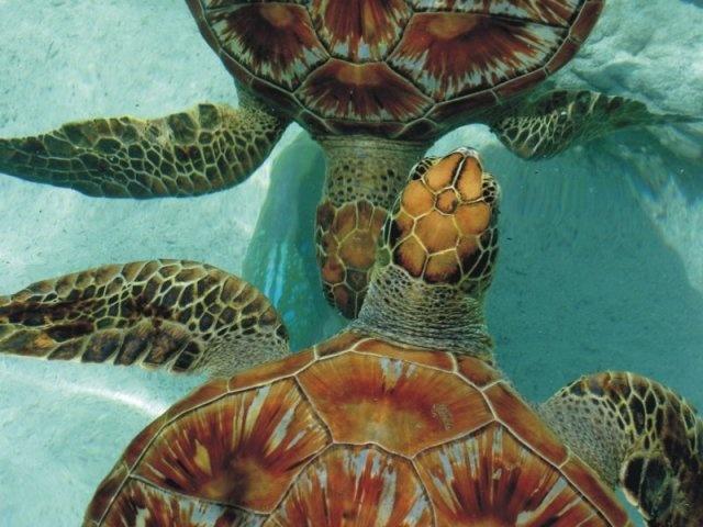 Tortugas Marinas Polinesia Francesa