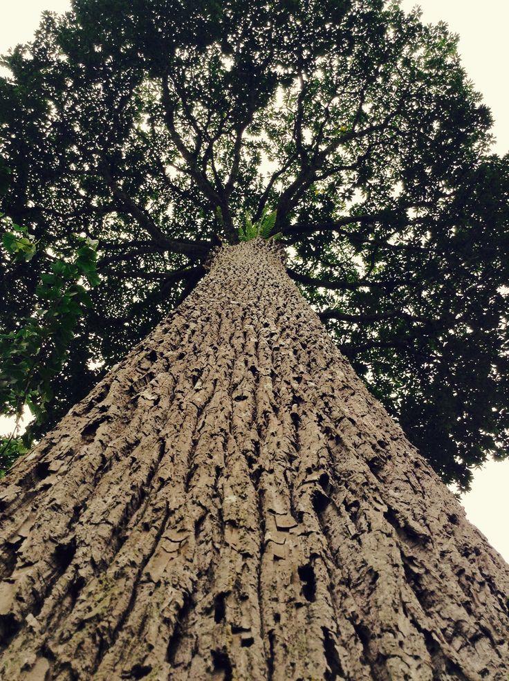 Under a Moabi tree | MOABI | Seeds