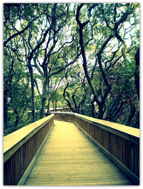 Jekyll Island, GA Boardwalk from the Hampton to the pristine beach that goes forever... K.W.
