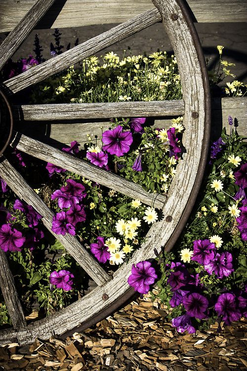 Wagon wheel and pretty petunias. (1) From: The Little Corner (2) Follow On Pinterest > The Little Corner