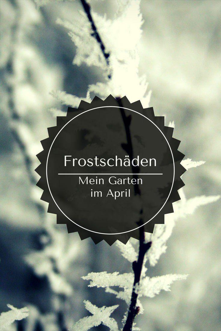 Frostschäden im Garten – Diese eine grausam-kalte Nacht im April 2017