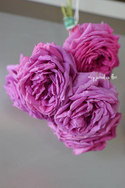 #trandafiri pusi #lauscat