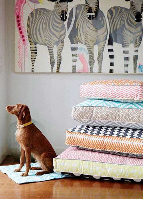 Stylish Dog Beds and Accessories from POOCCIO in toys collars leads beds furniture