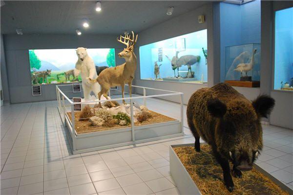Samos Paleontological Museum in Mitilini Village
