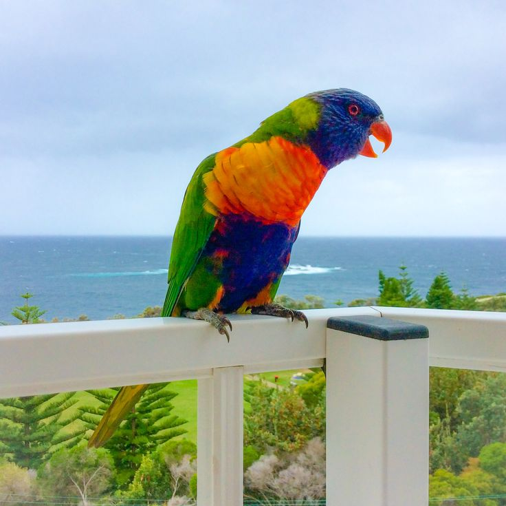 This little guy brought some colour to a grey day in Coogee