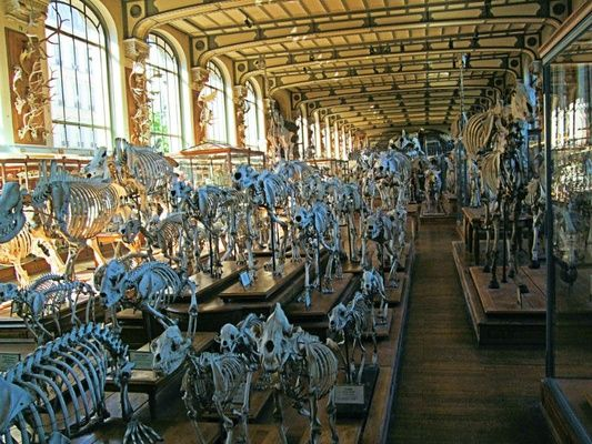 A Noah's Ark is Alive (and Dead) in Paris   FATHOM Travel Blog and Travel Guides