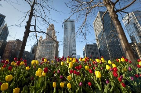 Spring 2014 Guide to Chicago | Fodor's
