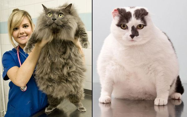 perierga.gr - Γάτες και σκύλοι μπαίνουν σε δίαιτα!