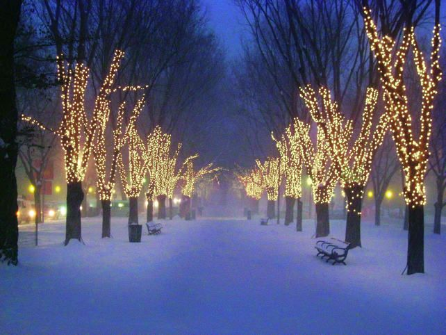 LED Christmas decor