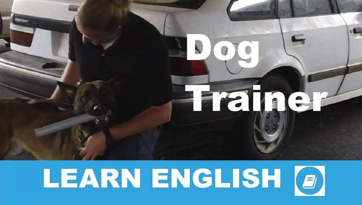 Angol középfokú hallás utáni szövegértés feladat megoldással. A szöveg témája: kutyakiképzés. Válaszolj angolul a szöveggel kapcsolatos kérdésekre!