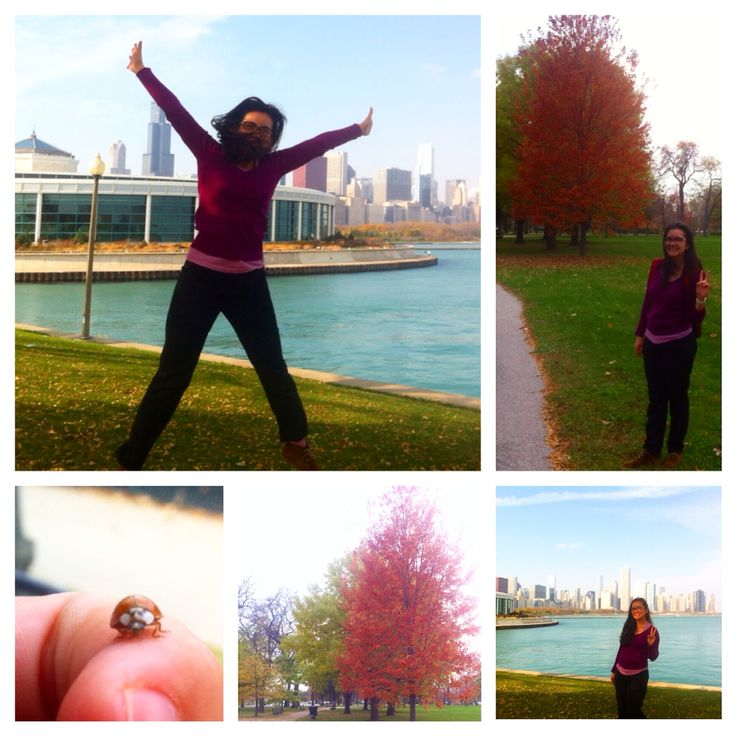 Lovely autumn time in Chicago