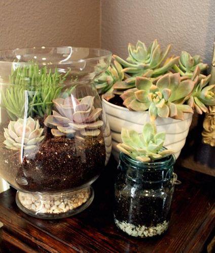 terrario suculenta bricolaje, jardinería en macetas, flores, jardinería, plantas suculentas, terrario, Fácil suculenta pieza central