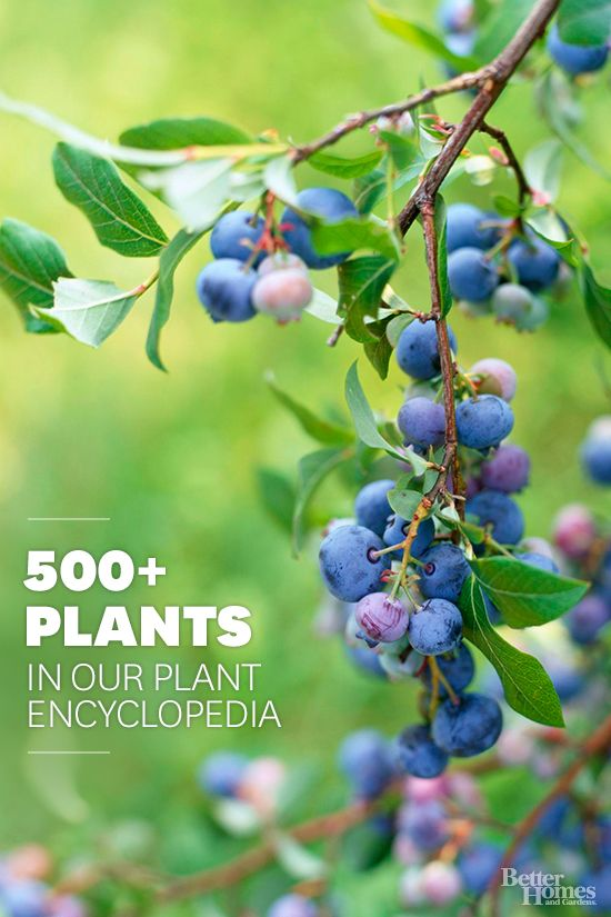 The Better Homes And Gardens Plant Encyclopedia Is An