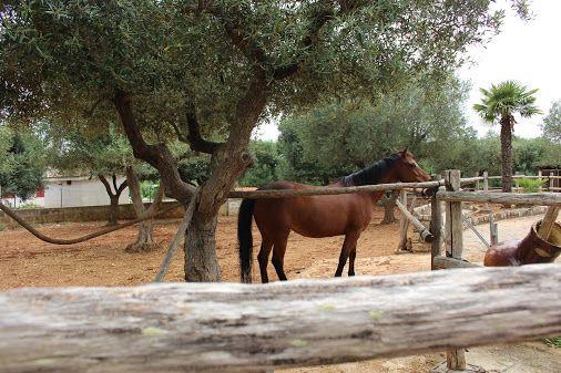 ..in Apulia Ask info: info@appartamentivacanzeitalia.com