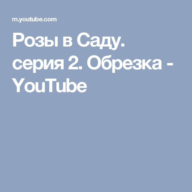 Розы в Саду. серия 2. Обрезка - YouTube