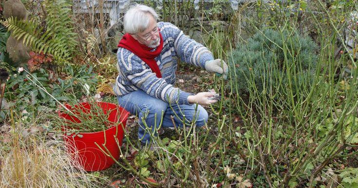 Laub entfernen, Stauden teilen oder Rasenkanten in Form bringen – die Aufgabenliste zum Herbstputz im Garten ist ziemlich lang. Hier lesen Sie, was Sie in Ihrem Garten vor Einbruch des Winters noch erledigen sollten.